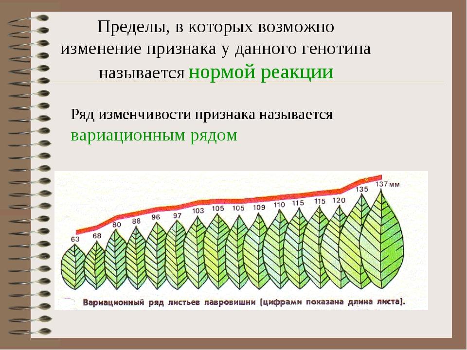 Фенатипическая изменчивость с картофелем