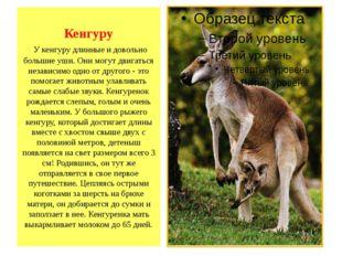 Кенгуру У кенгуру длинные и довольно большие уши. Они могут двигаться независ