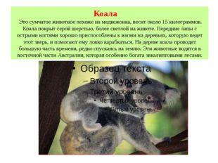 Коала Это сумчатое животное похоже на медвежонка, весит около 15 килограммов.