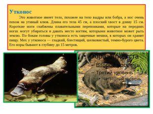Утконос Это животное имеет тело, похожее на тело выдры или бобра, а нос очень