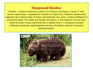 Медвежий Вомбат Вомбат - сумчатое животное, длина тела которого достигает 1 м