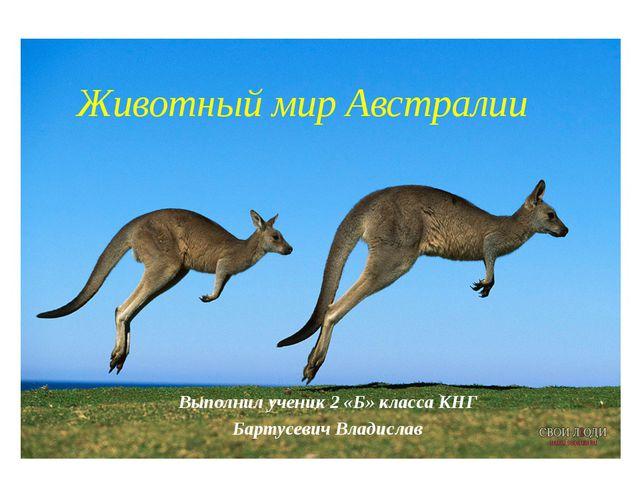 Выполнил ученик 2 «Б» класса КНГ Бартусевич Владислав Животный мир Австралии