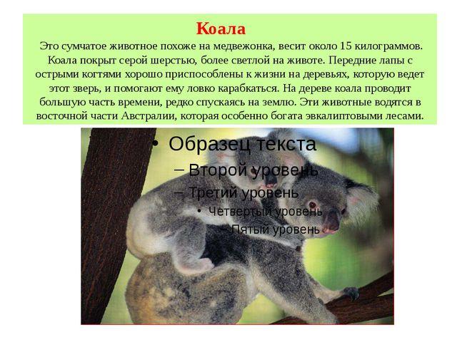 Коала Это сумчатое животное похоже на медвежонка, весит около 15 килограммов....