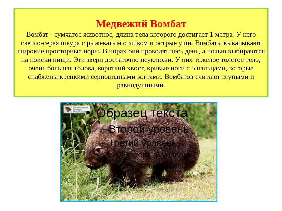 Медвежий Вомбат Вомбат - сумчатое животное, длина тела которого достигает 1 м...