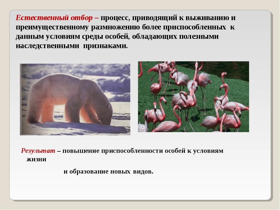 Естественный отбор – процесс, приводящий к выживанию и преимущественному разм...