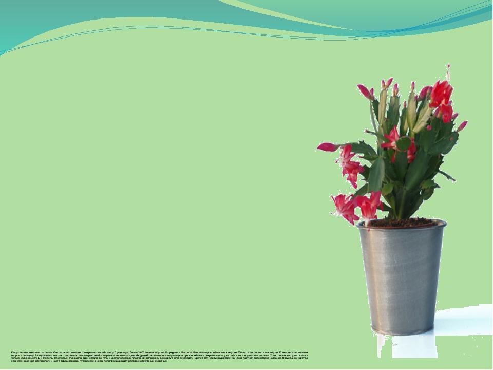 Кактусы – многолетние растения. Они запасают и надолго сохраняют в себе влагу...