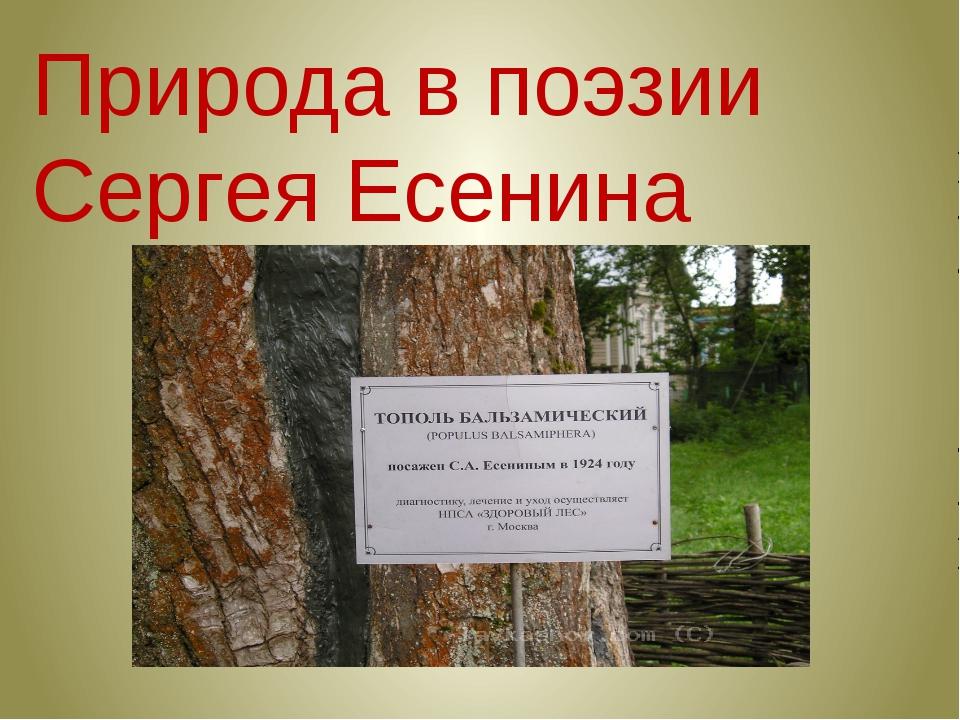 Природа в поэзии Сергея Есенина
