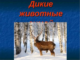 Дикие животные зимой