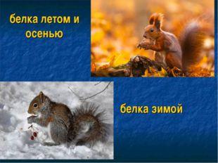 белка летом и осенью белка зимой