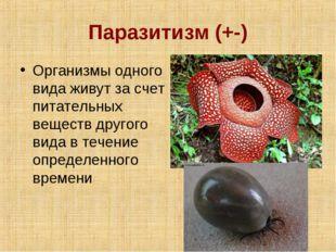 Паразитизм (+-) Организмы одного вида живут за счет питательных веществ друго