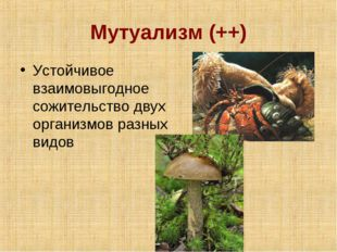 Мутуализм (++) Устойчивое взаимовыгодное сожительство двух организмов разных
