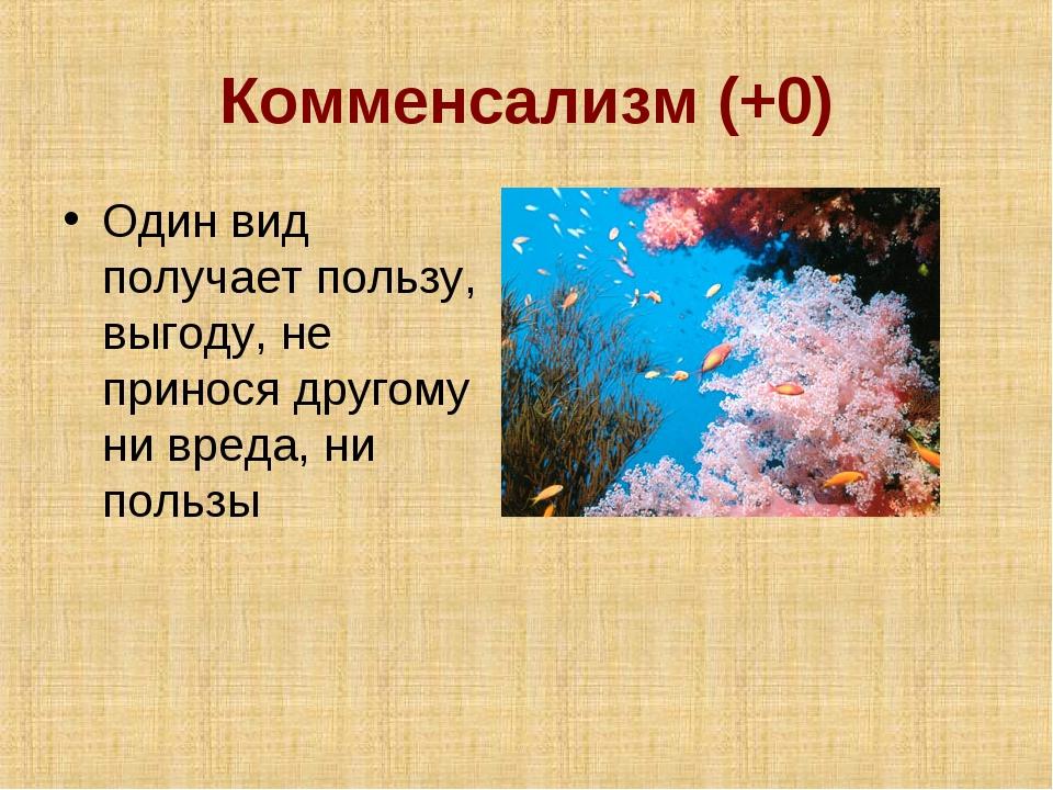 Комменсализм (+0) Один вид получает пользу, выгоду, не принося другому ни вре...