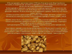 В Россию картофель завезли еще в начале XVIII века. В то время, когда Петр I