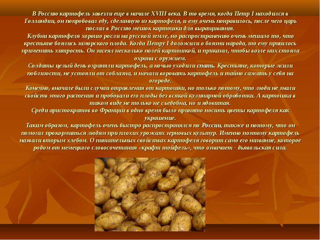 В Россию картофель завезли еще в начале XVIII века. В то время, когда Петр I...