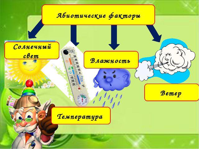 Абиотические факторы Солнечный свет Температура Влажность Ветер
