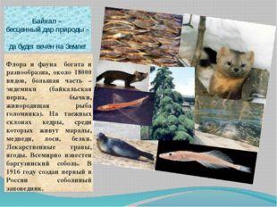 Байкал – бесценный дар природы – да будет вечен на Земле! Флора и фауна богат