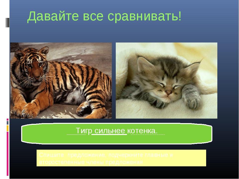 Давайте все сравнивать! Тигр сильнее котенка. Спишите предложение, подчеркни...