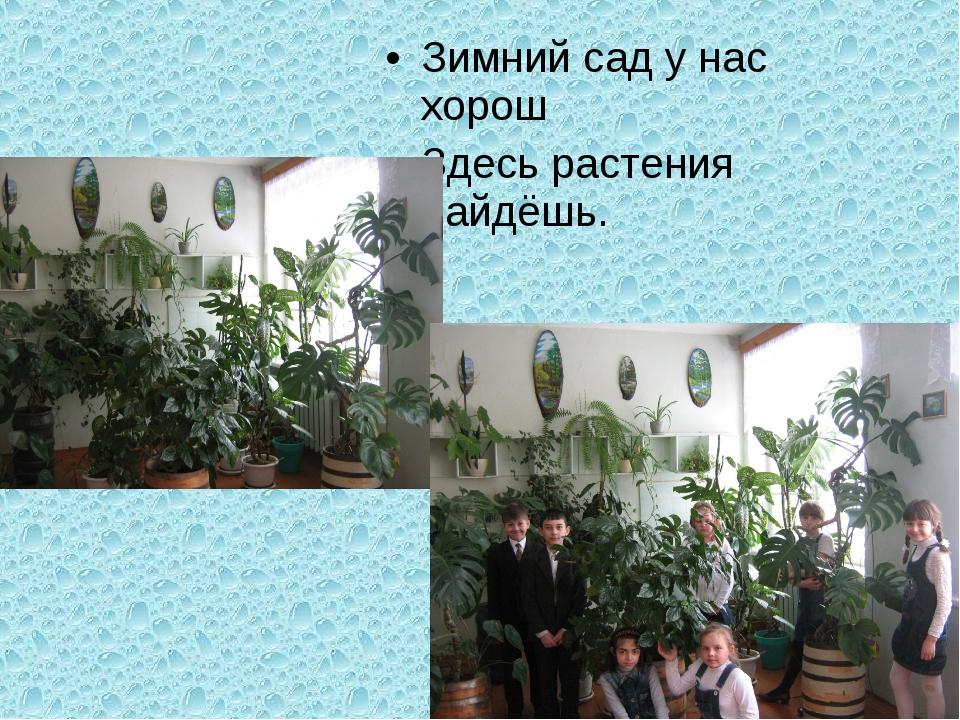 Зимний сад у нас хорош Здесь растения найдёшь.