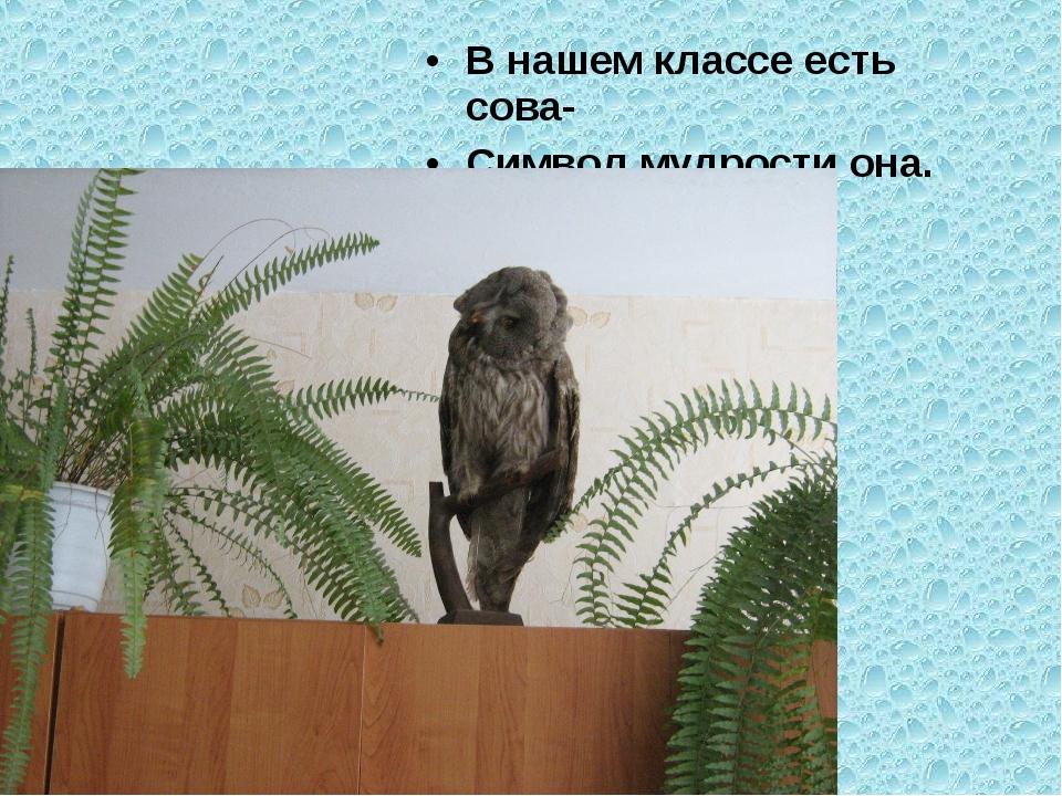 В нашем классе есть сова- Символ мудрости она.