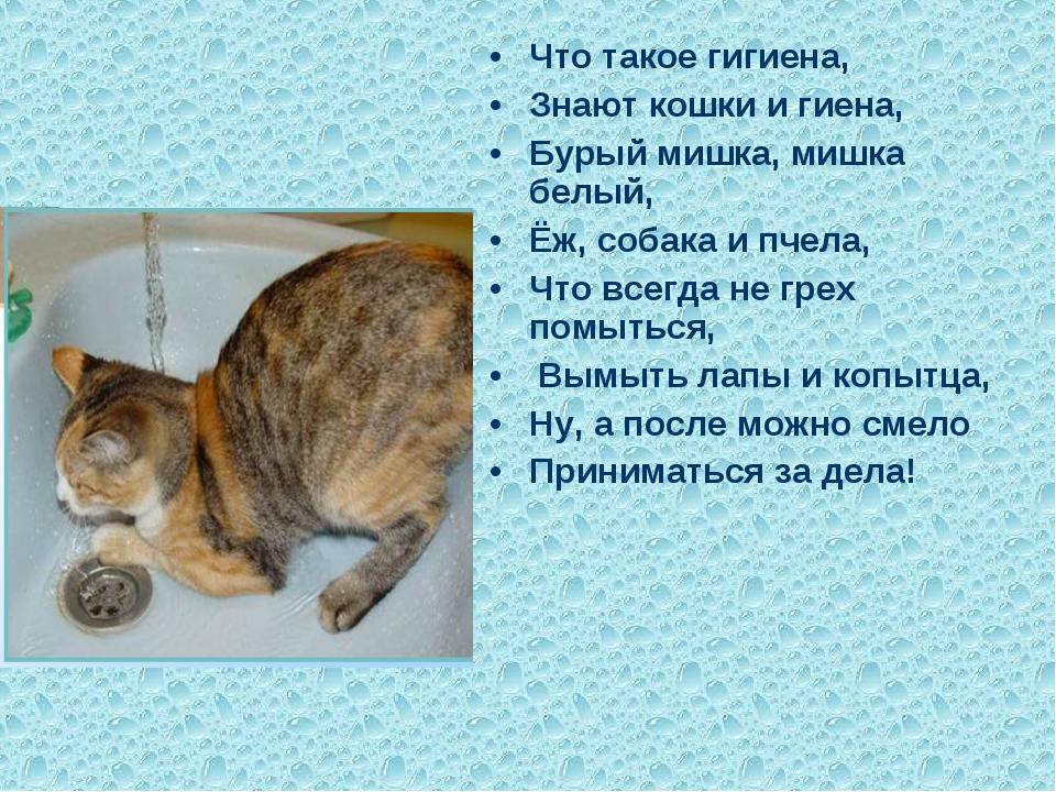Что такое гигиена, Знают кошки и гиена, Бурый мишка, мишка белый, Ёж, собака...