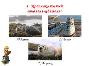 1. Краснокнижный «тюлень-цветок»: А) Антур Д) Ларга Е) Лахтак