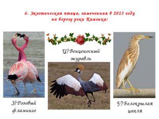 6. Экзотическая птица, замеченная в 2013 году на берегу реки Каменка: З) Розо