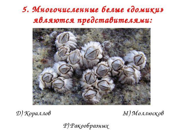 5. Многочисленные белые «домики» являются представителями: Д) Кораллов Р) Рак...