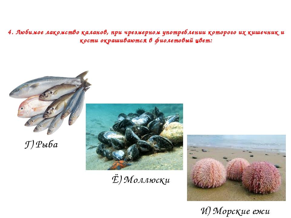 4. Любимое лакомство каланов, при чрезмерном употреблении которого их кишечни...