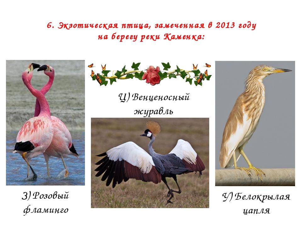 6. Экзотическая птица, замеченная в 2013 году на берегу реки Каменка: З) Розо...