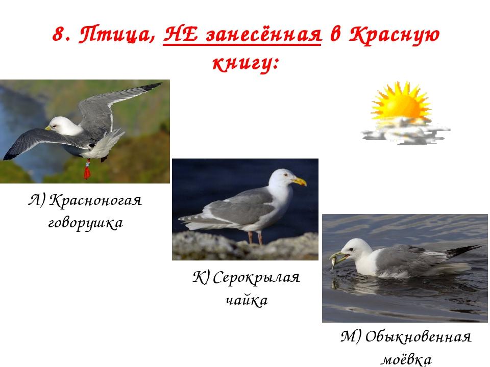 8. Птица, НЕ занесённая в Красную книгу: Л) Красноногая говорушка К) Серокрыл...