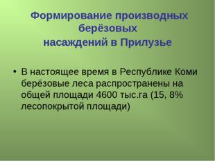 Формирование производных берёзовых насаждений в Прилузье В настоящее время в
