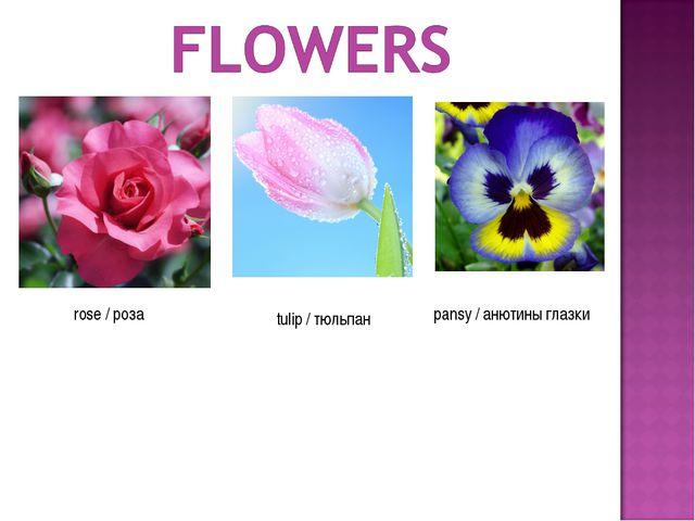 rose / роза tulip / тюльпан pansy / анютины глазки