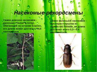 Насекомые-рекордсмены Самое длинное насекомое - палочник Phamacia kirbyi, оби
