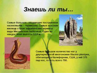 Знаешь ли ты… Самые большое сооружение построенное насекомыми – термитник. Са