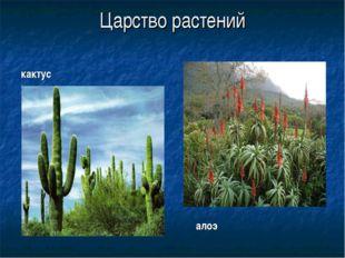 Царство растений кактус алоэ