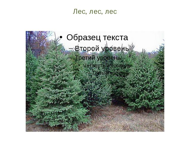 Лес, лес, лес