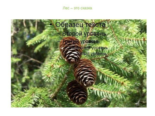 Лес – это сказка
