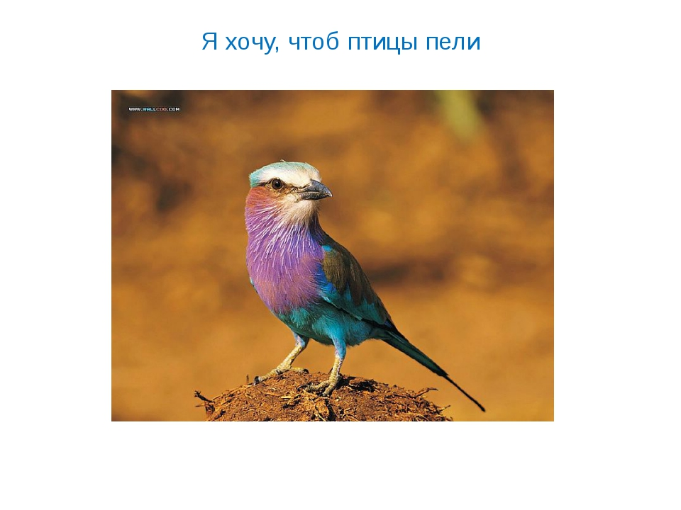 Я хочу, чтоб птицы пели