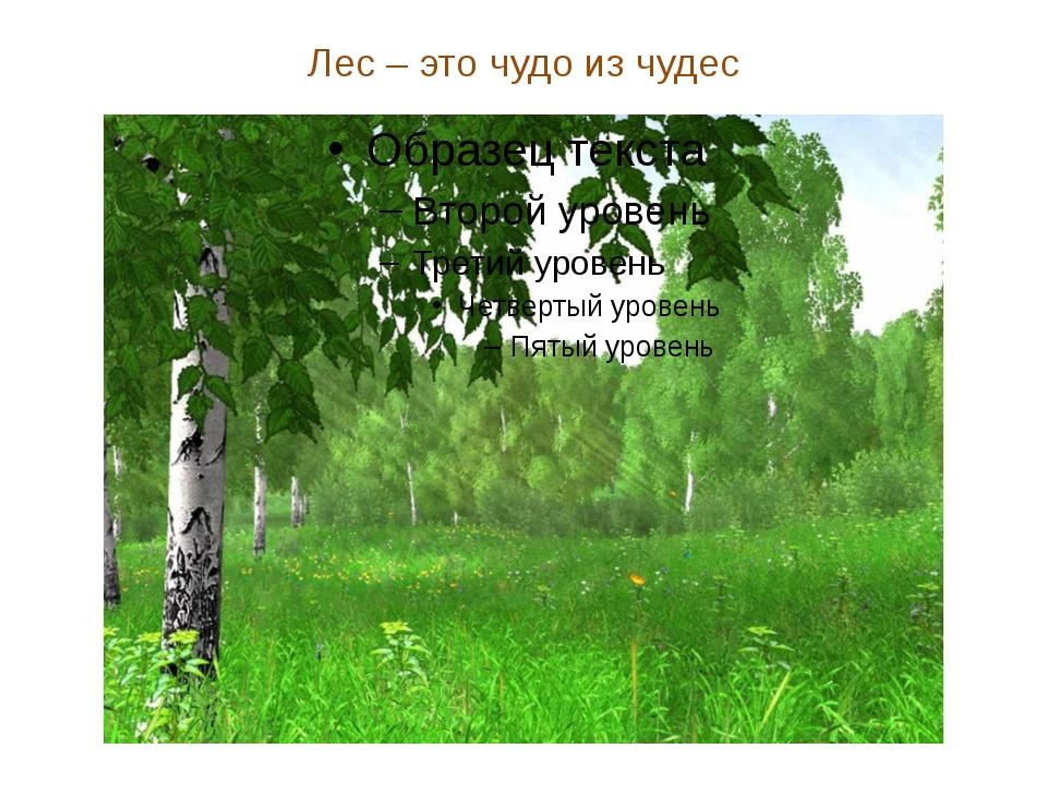 Лес – это чудо из чудес