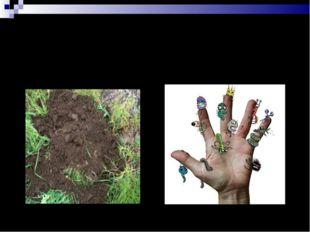 Любимые места микробов 3. Почва 4. Человек