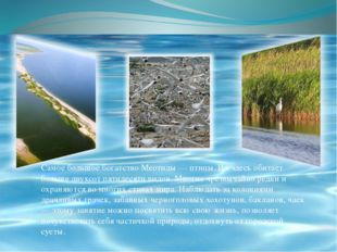 Самое большое богатство Меотиды — птицы. Их здесь обитает больше двухсот пяти