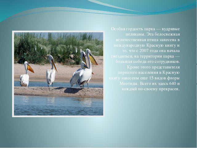 Особая гордость парка — кудрявые пеликаны. Эта белоснежная величественная пти...