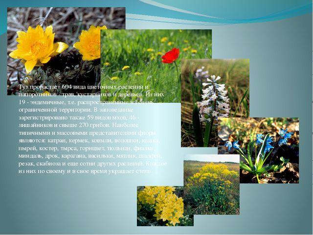 Тут прорастает 604 вида цветочных растений и папоротников - трав, кустарников...