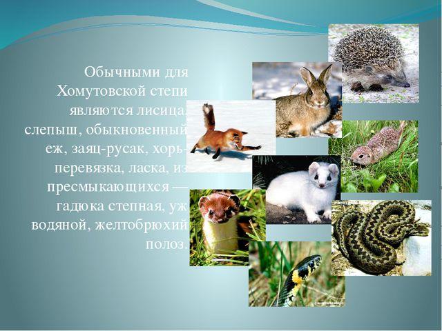Обычными для Хомутовской степи являются лисица, слепыш, обыкновенный еж, заяц...