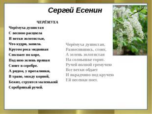 Сергей Есенин ЧЕРЁМУХА Черёмуха душистая С весною расцвела И ветки золотистые