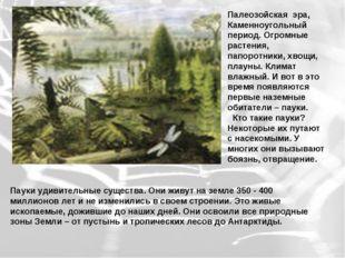 Палеозойская эра, Каменноугольный период. Огромные растения, папоротники, хво