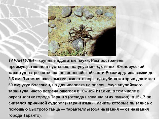 ТАРАНТУЛЫ - крупные ядовитые пауки. Распространены преимущественно в пустынях...