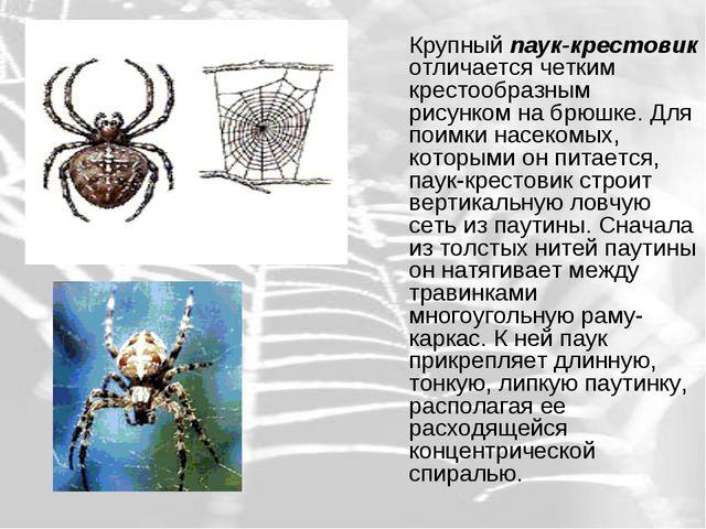 Крупный паук-крестовик отличается четким крестообразным рисунком на брюшке....