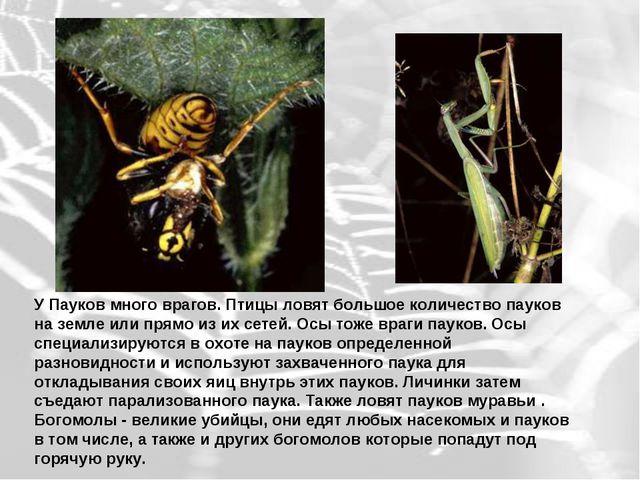 У Пауков много врагов. Птицы ловят большое количество пауков на земле или пр...