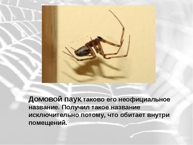 Домовой паук, таково его неофициальное название. Получил такое название искл...